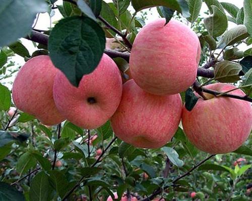 南京水果配送的意义和重点是什么