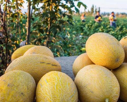 关于吃水果南京有机水果配送教你避开5大误区